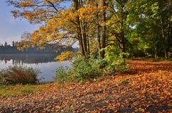 Mattina di autunno Immagini Stock Libere da Diritti