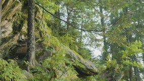 Mattina di estate in legno mistico Belle viste nel legno Foresta leggiadramente video d archivio