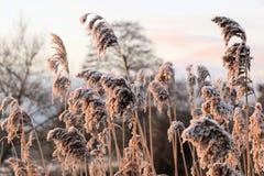 Mattina di inverni. Immagine Stock