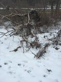 Mattina di inverni Fotografia Stock Libera da Diritti