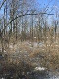 Mattina di inverni Fotografia Stock