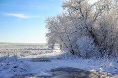 Mattina di inverno di Snowy fotografia stock