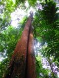 Mattina di luce solare nella foresta Fotografie Stock