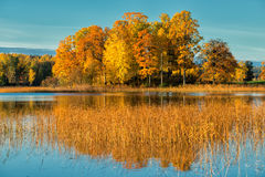 Mattina di ottobre in Svezia Fotografie Stock Libere da Diritti