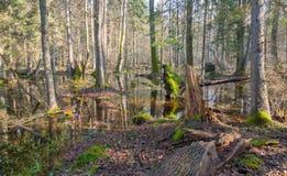 Mattina di primavera in foresta Immagine Stock