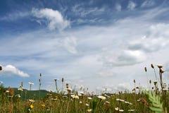 Mattina fine in montagne su un glade del fiore fotografie stock