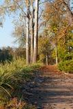 Mattina fredda di autunno. Fotografia Stock Libera da Diritti