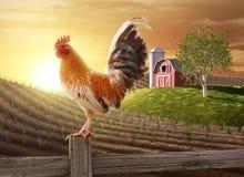 Mattina fresca dell'azienda agricola Fotografia Stock Libera da Diritti
