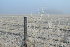 Mattina gelida di inverno Immagini Stock
