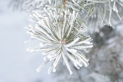 Mattina gelida di inverno Fotografia Stock
