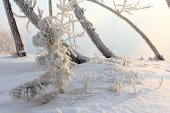 Mattina gelida di inverno sulla sponda del fiume Fotografia Stock Libera da Diritti