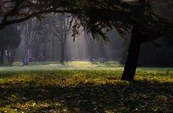 Mattina in giardini Immagini Stock Libere da Diritti
