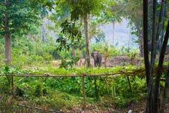 Mattina in giungla Fotografia Stock Libera da Diritti