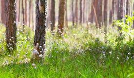 Mattina in la foresta di primavera fotografia stock