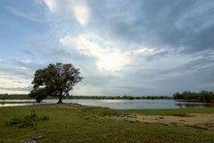 mattina in lago Immagini Stock