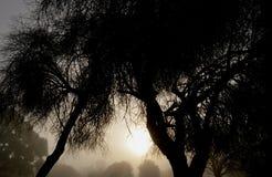 Mattina nebbiosa fotografie stock libere da diritti