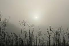 mattina nebbiosa Fotografie Stock