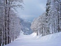 Mattina nebbiosa alle montagne, supporto Vogel, alpi slovene Immagine Stock
