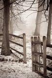 Mattina nebbiosa attraverso gli alberi Fotografie Stock Libere da Diritti