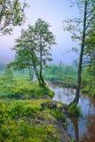 Mattina nebbiosa con l'albero al bordo di un ruscello Fotografia Stock
