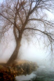 Mattina nebbiosa dal lago Immagine Stock Libera da Diritti