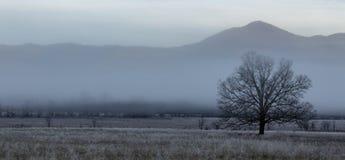 Mattina nebbiosa della baia dei cades nel grande parco nazionale delle montagne fumose immagini stock