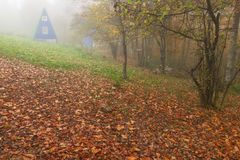 Mattina nebbiosa della Camera nella foresta di autunno Immagine Stock