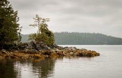 Mattina nebbiosa della costa ovest Fotografia Stock Libera da Diritti