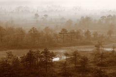 Mattina nebbiosa della foresta misteriosa fotografie stock libere da diritti