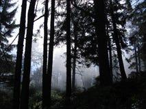 Mattina nebbiosa della foresta nebbiosa degli alberi Immagine Stock