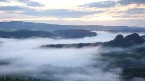 Mattina nebbiosa della primavera nel paesaggio della foresta La valle profonda dei picchi del taglio della foschia maestosa di il video d archivio