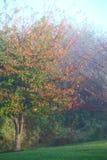 Mattina nebbiosa di autunno Fotografia Stock
