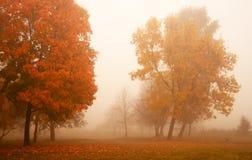 mattina nebbiosa di autunno fotografia stock libera da diritti