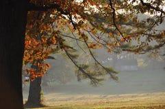 Mattina nebbiosa di autunno Immagine Stock Libera da Diritti