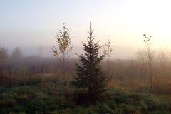 Mattina nebbiosa di autunno in un villaggio Immagine Stock