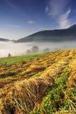 Mattina nebbiosa di estate in alto Tatras (Vysoké Tatry) Immagine Stock