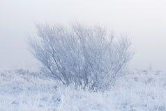 Mattina nebbiosa di inverno immagini stock libere da diritti