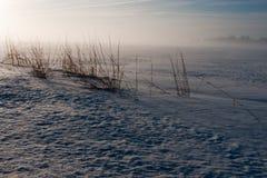 Mattina nebbiosa di inverno nella prateria fotografie stock libere da diritti