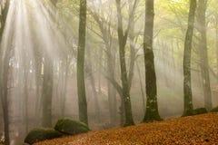 Mattina nebbiosa in legno nebbioso Immagine Stock Libera da Diritti