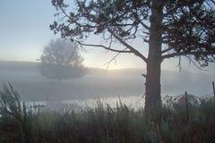 Mattina nebbiosa lungo il fiume perso. Fotografie Stock