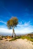 Mattina nebbiosa nella baia di Trieste Fotografie Stock