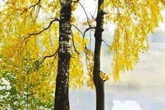 Mattina nebbiosa nella foresta Immagini Stock