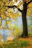 Mattina nebbiosa nella foresta Immagine Stock Libera da Diritti