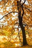 Mattina nebbiosa nella foresta Fotografie Stock