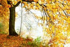 Mattina nebbiosa nella foresta Immagini Stock Libere da Diritti