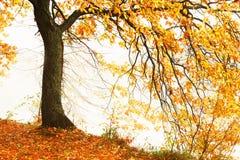 Mattina nebbiosa nella foresta Fotografia Stock Libera da Diritti