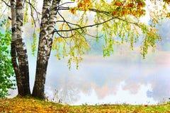 Mattina nebbiosa nella foresta Immagine Stock