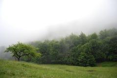 Mattina nebbiosa nella foresta della montagna Fotografie Stock Libere da Diritti