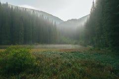 Mattina nebbiosa nella foresta profonda Fotografia Stock Libera da Diritti