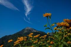 Mattina nebbiosa nelle alpi austriache Immagini Stock Libere da Diritti
